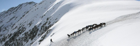 Transhumance to Tusheti with our horses