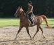 Horseback riding in Germany - © Roland Vidmar / ride77.com