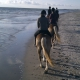 Horseback riding along the beach at the sea - © ride77.com / RV